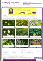 Outstanding Science Year 1 - Plants | Identifying wild plants