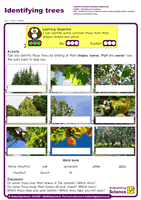 Outstanding Science Year 1 - Plants | Identifying trees
