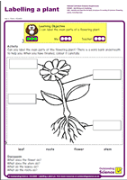Outstanding Science Year 1 - Plants | Labelling a plant