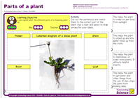 Outstanding Science Year 1 - Plants | Parts of a plant