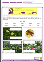 Outstanding Science Year 1 - Plants | Labelling different plants