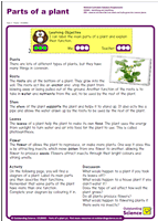 Outstanding Science Year 2 - Plants | Parts of a plant