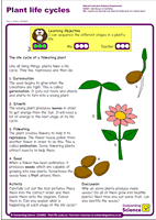 Outstanding Science Year 2 - Plants | Plant life cycles