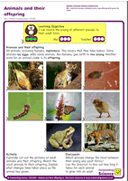 Outstanding Science Year 2 - Animals, including humans | Animals and their offspring