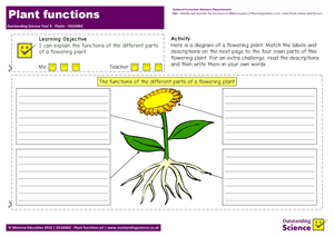 Outstanding Science Year 3 - Plants | Plant Functions