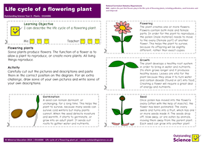 Outstanding Science Year 3 - Plants | Life cycle of a flowering plant