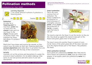Outstanding Science Year 3 - Plants | Pollination methods