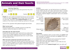 Outstanding Science Year 3 - Rocks | Animals and their fossils