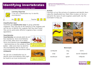 Outstanding Science Year 4 - Living things and their habitats | Identifying invertebrates