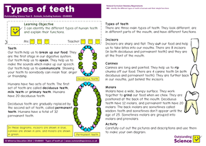 Outstanding Science Year 4 - Animals, including humans | Types of teeth