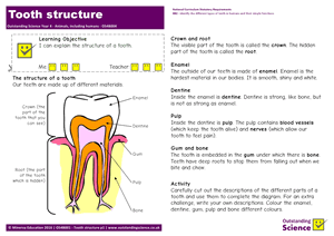 Outstanding Science Year 4 - Animals, including humans | Tooth structure