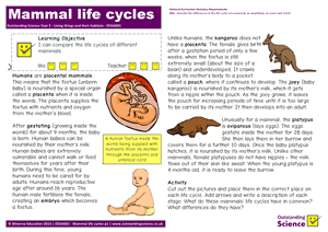 Outstanding Science Year 5 - Living things and their habitats | Mammal life cycles