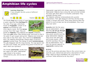 Outstanding Science Year 5 - Living things and their habitats | Amphibian life cycles