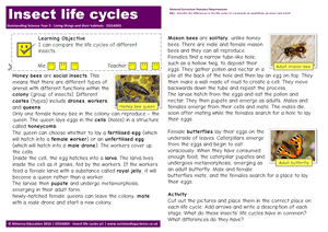 Outstanding Science Year 5 - Living things and their habitats | Insect life cycles