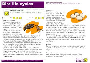 Outstanding Science Year 5 - Living things and their habitats | Bird life cycles
