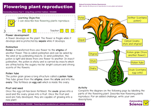 Outstanding Science Year 5 - Living things and their habitats | Flowering plant reproduction