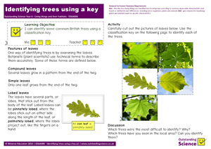 Outstanding Science Year 6 - Living things and their habitats | Identifying trees using a key
