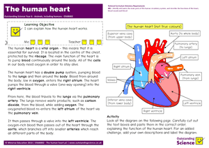 Outstanding Science Year 6 - Animals, including humans | The human heart